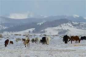 Winter Graze